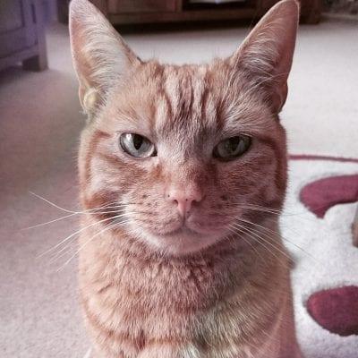 Emma's cat Ollie