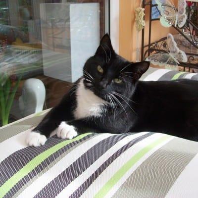 Di's cat Wilma