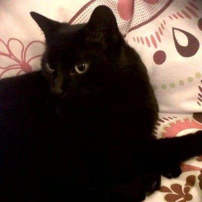 Jackie's cat Bo