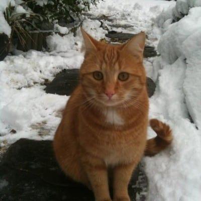 Diane's cat Dougal