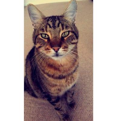 Laura's cat Marmite