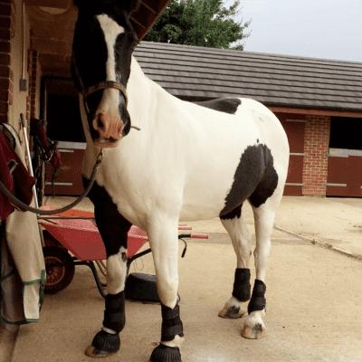 Becky's horse, Monty